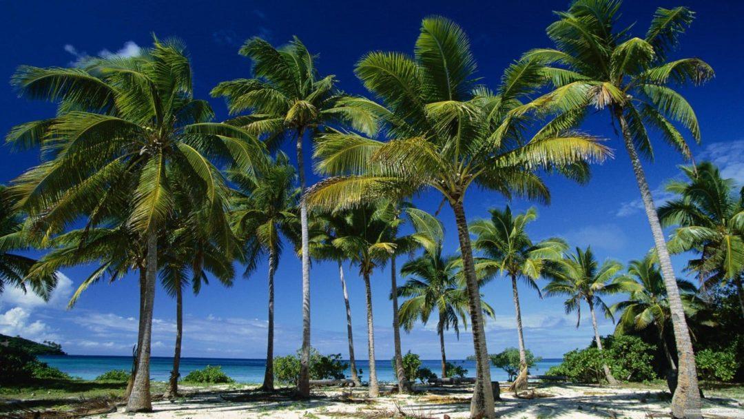 Семейство кокосовых