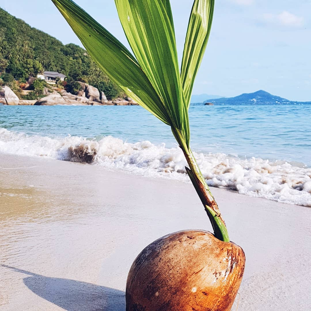 Где растут кокосы