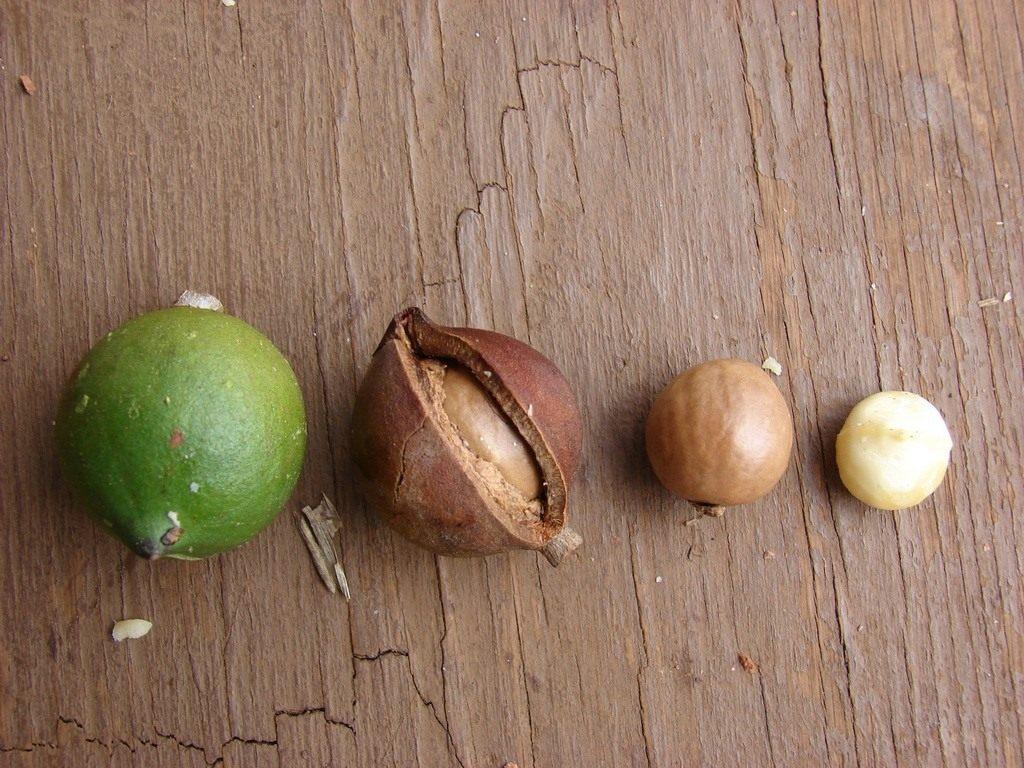 Использование скорлупы ореха макадамия