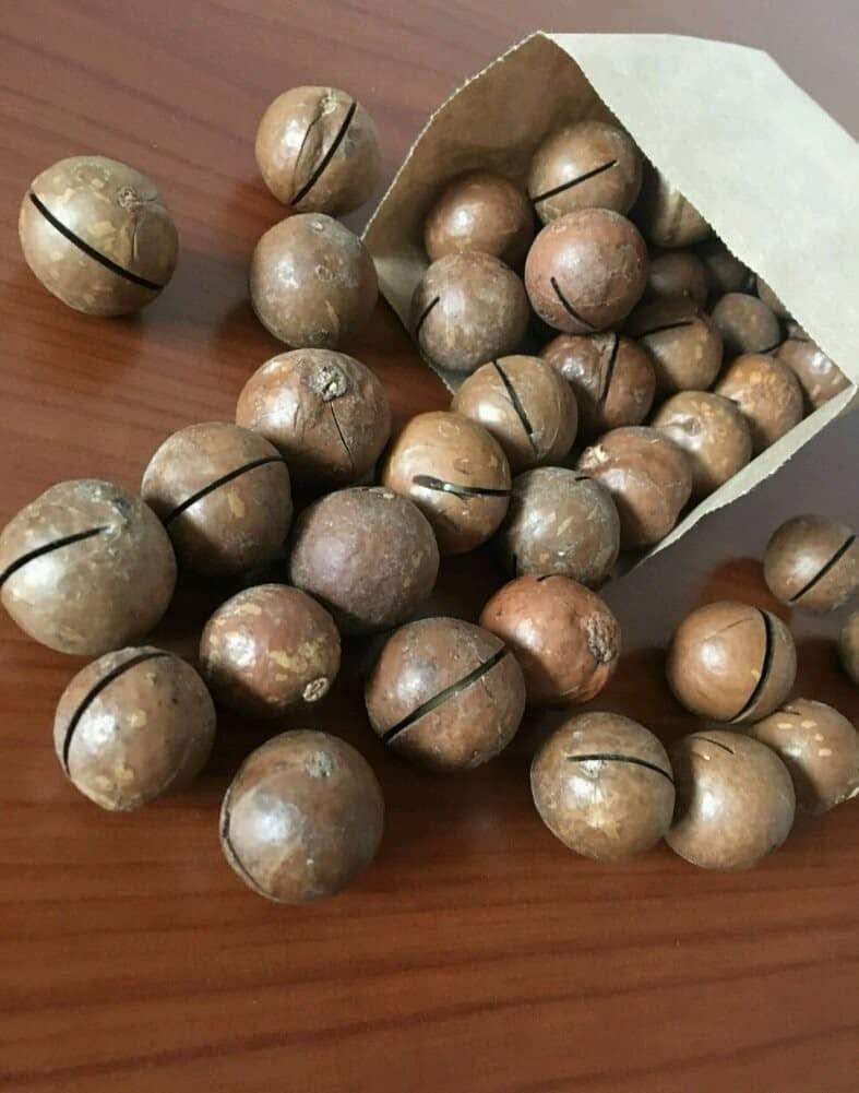 Как хранить орехи макадамия
