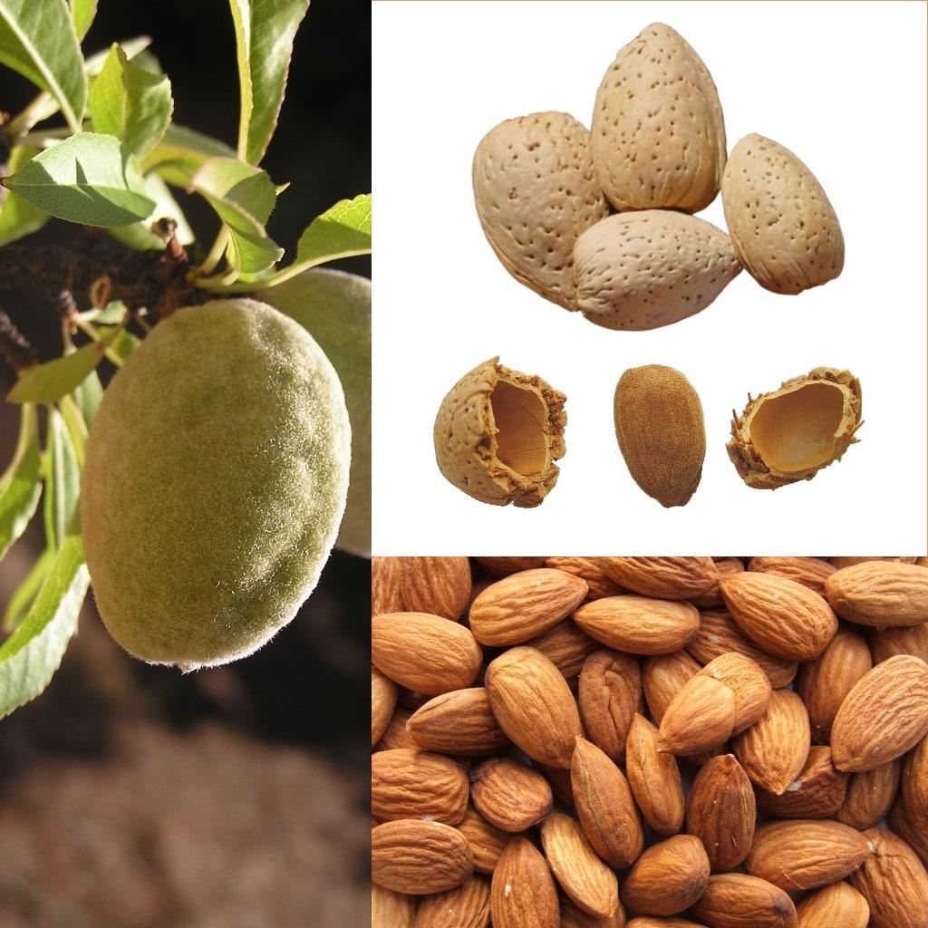 Состав миндального ореха