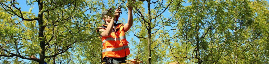 Как ухаживать за деревом