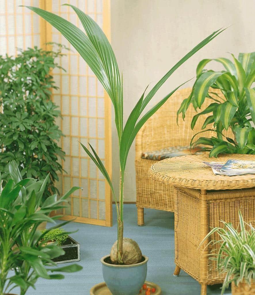Освещение для пальмы кокоса