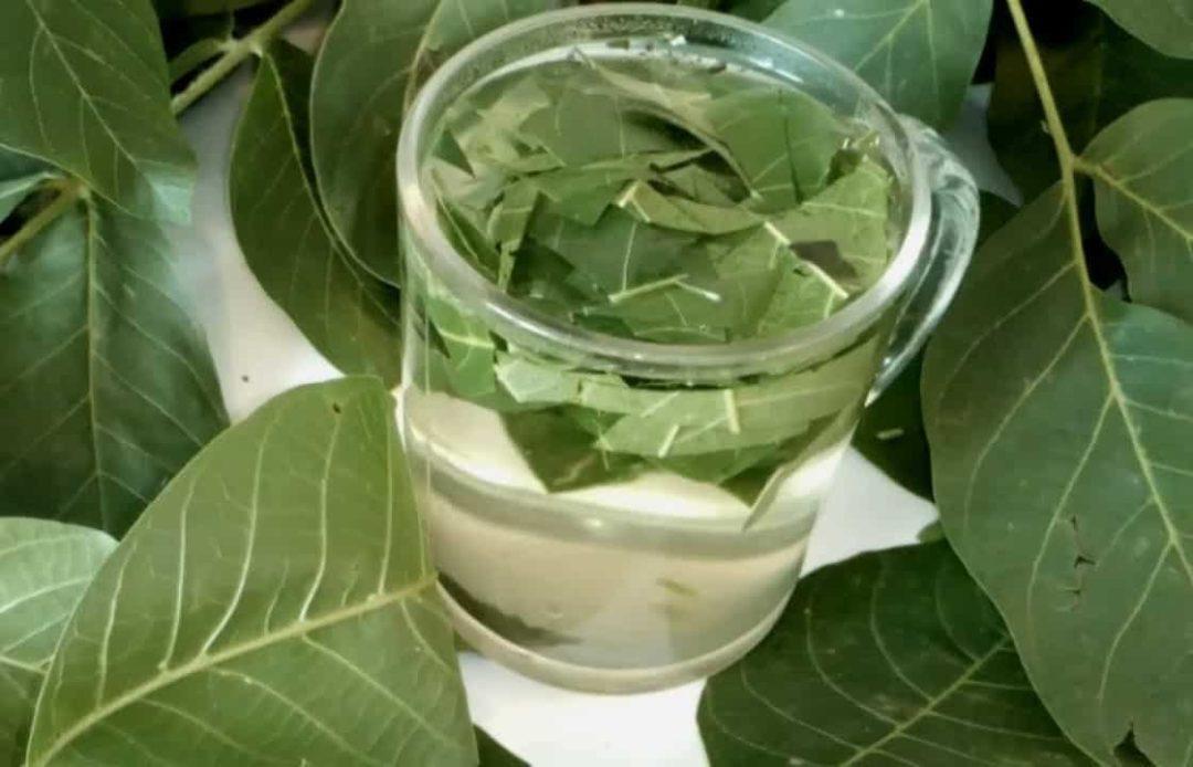 Настой на листьях грецкого ореха