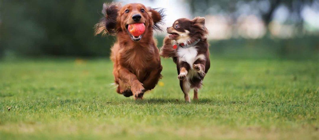 Семечки для собак