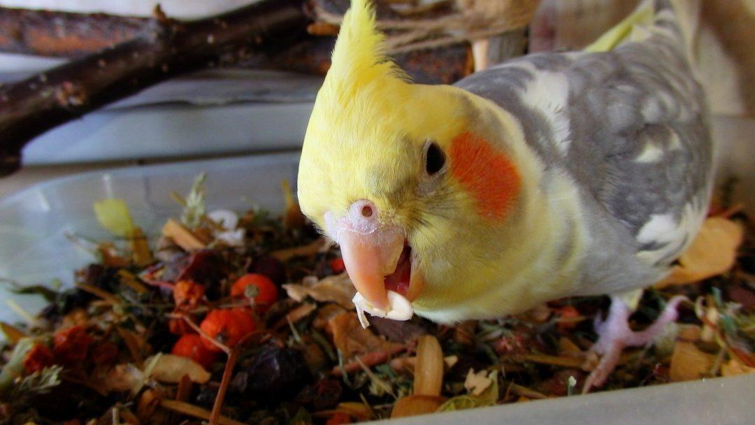 Семечки для попугаев