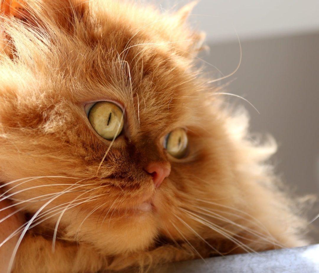 Семечки для кошек
