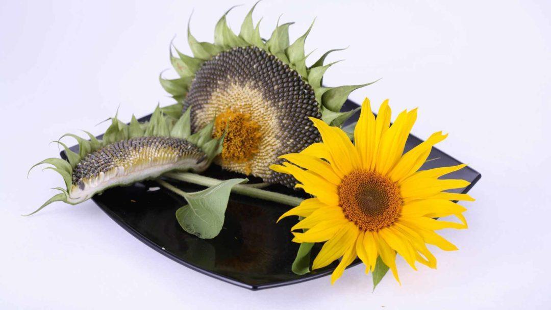 Семена на большой красивой тарелки