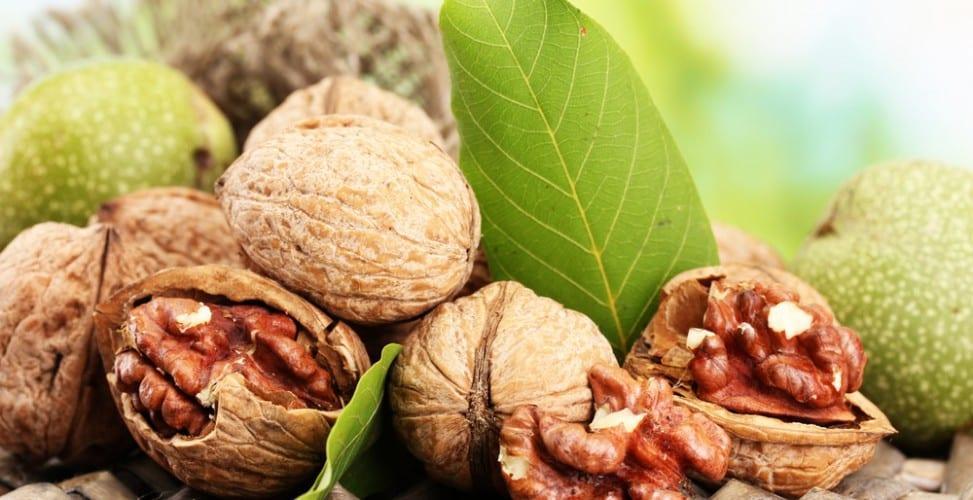 Скорлупа грецкого ореха лечебные свойства