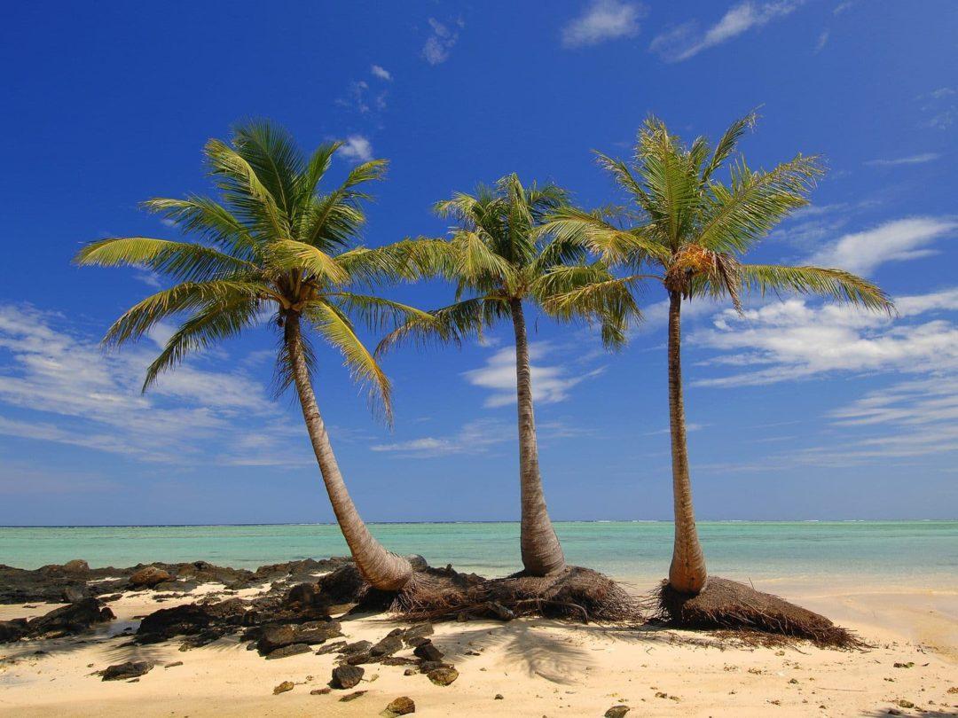 Кокосовая пальма плод сочный или сухой