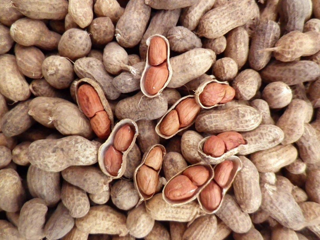 Земляной орех арахис выращивание
