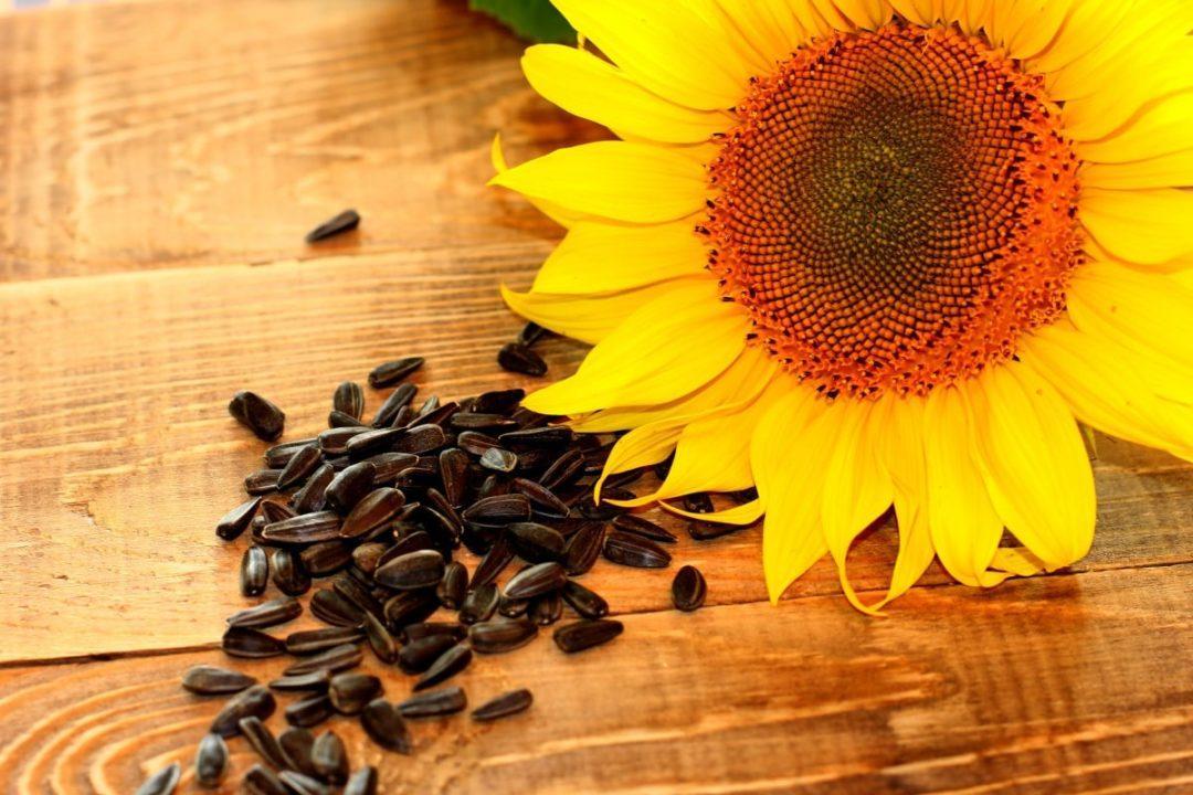 Сколько калорий в семечках жареных (подсолнуха, тыквенных)?